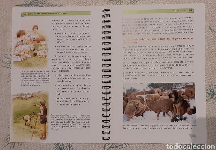 Libros de segunda mano: El Mastín. Un aliado del ganadero. Manual para su educación y cuidados. Perros - Foto 2 - 247603790