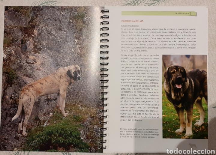 Libros de segunda mano: El Mastín. Un aliado del ganadero. Manual para su educación y cuidados. Perros - Foto 3 - 247603790