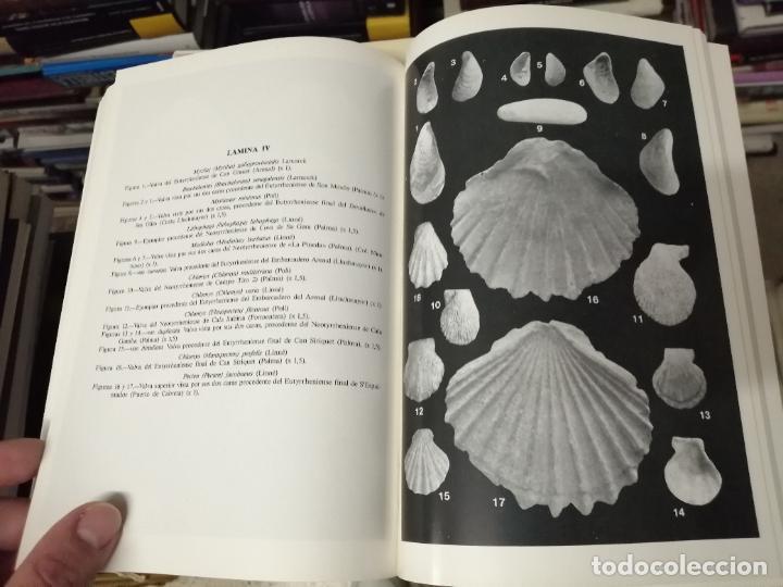 MOLUSCOS MARINOS Y SALOBRES DEL PLEISTOCENO BALEAR. JUAN CUERDA. 1987. MALLORCA (Libros de Segunda Mano - Ciencias, Manuales y Oficios - Paleontología y Geología)