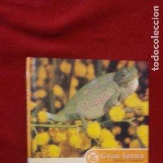Libros de segunda mano: EL CAMALEON - GRAN FAUNA IBERICA E INSULAR - ED. CIRCULO DE LECTORES - CARTONE. Lote 262154795
