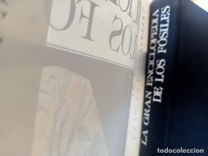Libros de segunda mano: LA GRAN ENCICLOPEDIA DE LOS FÓSILES Vojtech Turek Jaroslav Marek Josef Benes SUSAETA 1989 - Foto 3 - 269090733