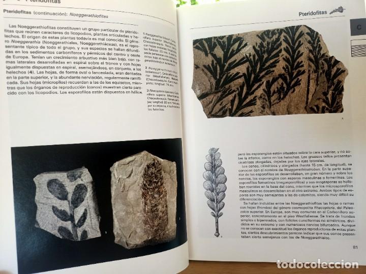 Libros de segunda mano: LA GRAN ENCICLOPEDIA DE LOS FÓSILES Vojtech Turek Jaroslav Marek Josef Benes SUSAETA 1989 - Foto 7 - 269090733