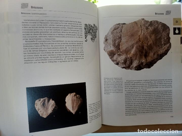 Libros de segunda mano: LA GRAN ENCICLOPEDIA DE LOS FÓSILES Vojtech Turek Jaroslav Marek Josef Benes SUSAETA 1989 - Foto 9 - 269090733