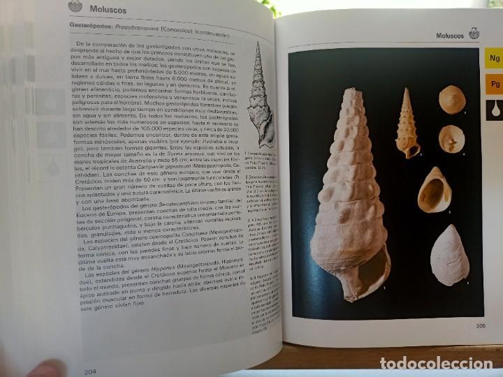 Libros de segunda mano: LA GRAN ENCICLOPEDIA DE LOS FÓSILES Vojtech Turek Jaroslav Marek Josef Benes SUSAETA 1989 - Foto 10 - 269090733