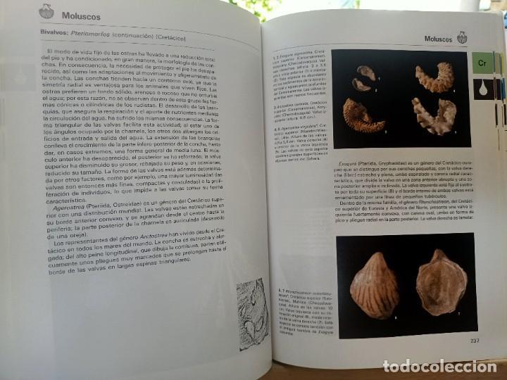 Libros de segunda mano: LA GRAN ENCICLOPEDIA DE LOS FÓSILES Vojtech Turek Jaroslav Marek Josef Benes SUSAETA 1989 - Foto 11 - 269090733