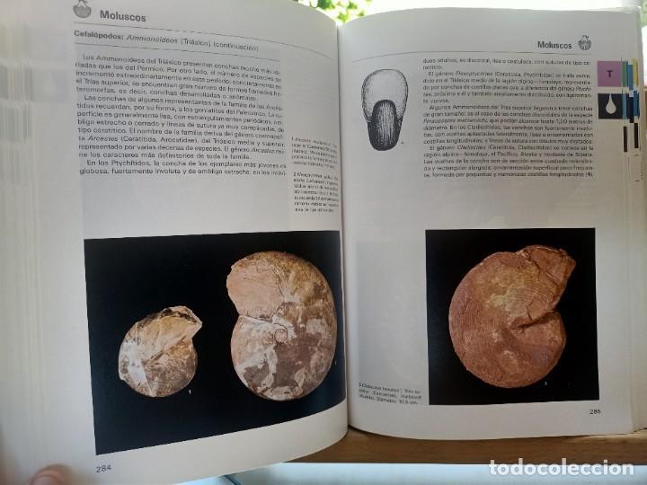 Libros de segunda mano: LA GRAN ENCICLOPEDIA DE LOS FÓSILES Vojtech Turek Jaroslav Marek Josef Benes SUSAETA 1989 - Foto 12 - 269090733