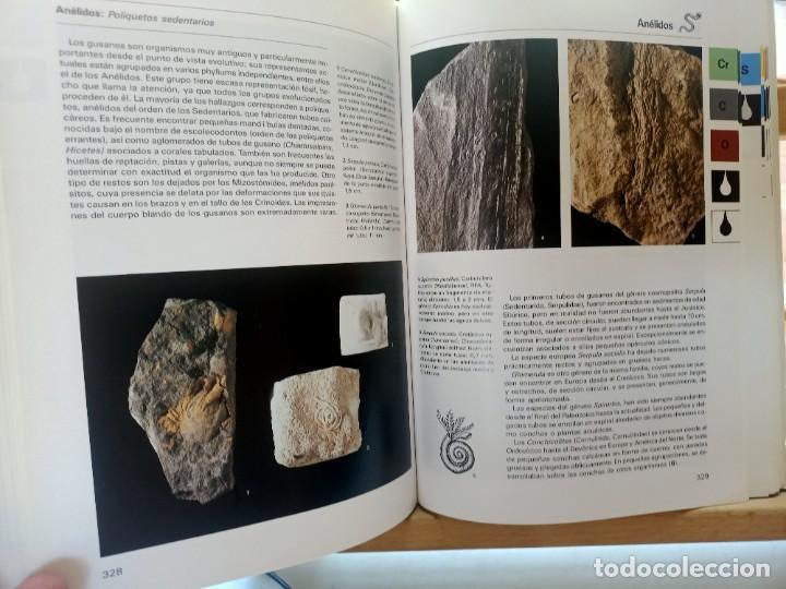 Libros de segunda mano: LA GRAN ENCICLOPEDIA DE LOS FÓSILES Vojtech Turek Jaroslav Marek Josef Benes SUSAETA 1989 - Foto 13 - 269090733