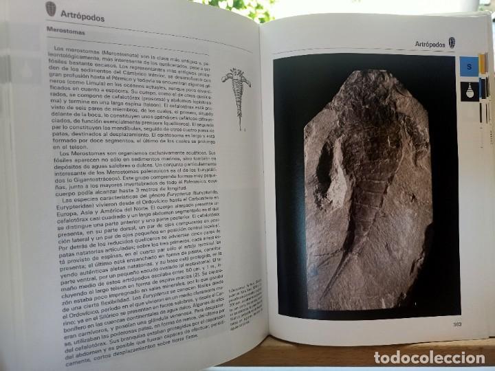 Libros de segunda mano: LA GRAN ENCICLOPEDIA DE LOS FÓSILES Vojtech Turek Jaroslav Marek Josef Benes SUSAETA 1989 - Foto 14 - 269090733