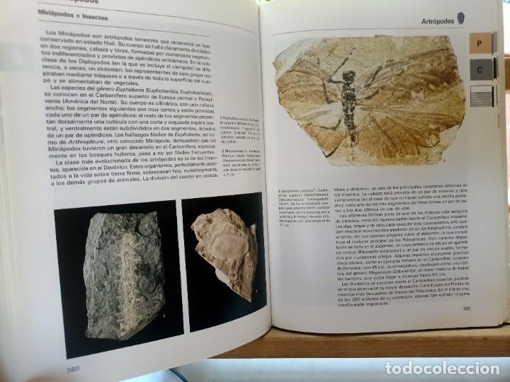 Libros de segunda mano: LA GRAN ENCICLOPEDIA DE LOS FÓSILES Vojtech Turek Jaroslav Marek Josef Benes SUSAETA 1989 - Foto 15 - 269090733