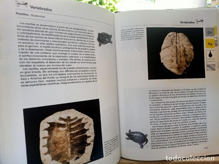 Libros de segunda mano: LA GRAN ENCICLOPEDIA DE LOS FÓSILES Vojtech Turek Jaroslav Marek Josef Benes SUSAETA 1989 - Foto 16 - 269090733