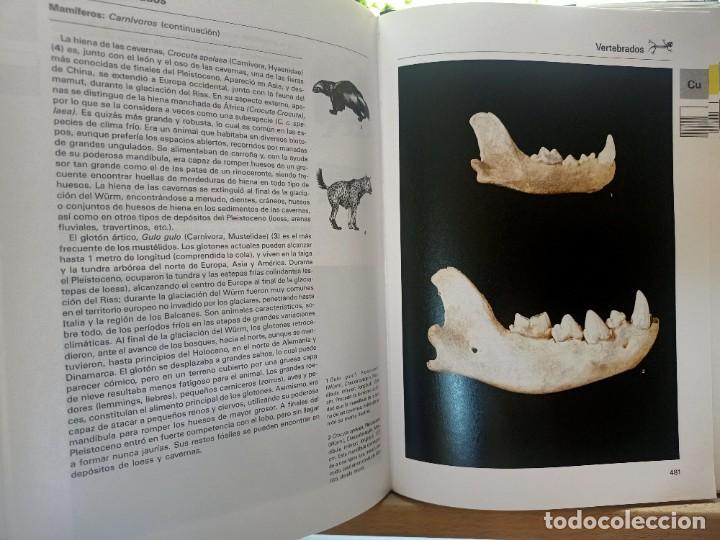 Libros de segunda mano: LA GRAN ENCICLOPEDIA DE LOS FÓSILES Vojtech Turek Jaroslav Marek Josef Benes SUSAETA 1989 - Foto 17 - 269090733