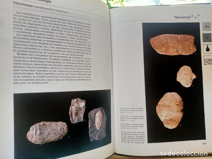 Libros de segunda mano: LA GRAN ENCICLOPEDIA DE LOS FÓSILES Vojtech Turek Jaroslav Marek Josef Benes SUSAETA 1989 - Foto 19 - 269090733