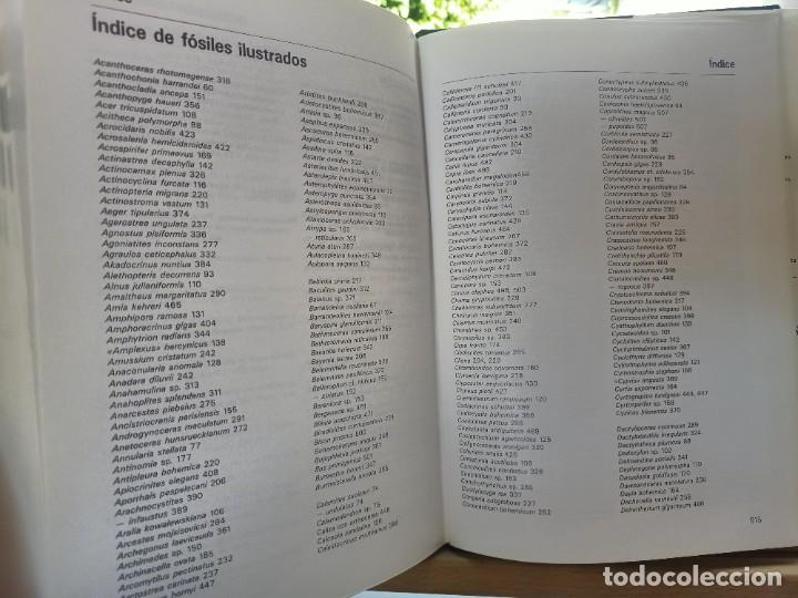 Libros de segunda mano: LA GRAN ENCICLOPEDIA DE LOS FÓSILES Vojtech Turek Jaroslav Marek Josef Benes SUSAETA 1989 - Foto 21 - 269090733