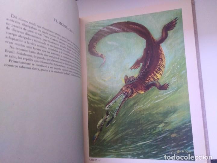Libros de segunda mano: LOS ANIMALES PREHISTORICOS DR JOSEF AUGUSTA QUEROMON EDITORES - Foto 6 - 269092273