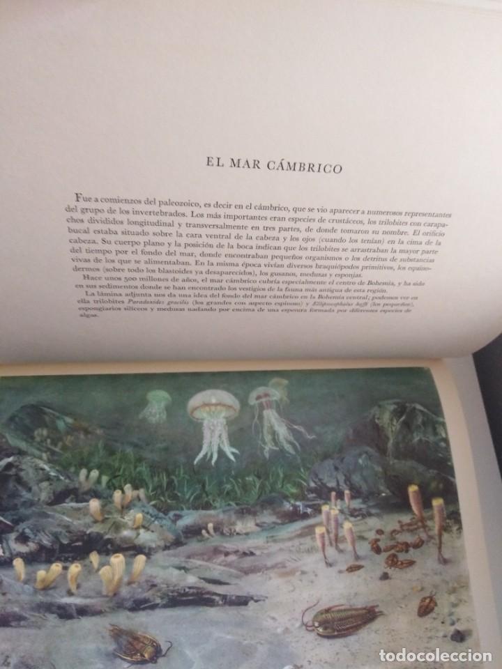 Libros de segunda mano: LOS ANIMALES PREHISTORICOS DR JOSEF AUGUSTA QUEROMON EDITORES - Foto 8 - 269092273