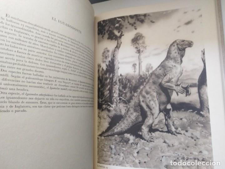 Libros de segunda mano: LOS ANIMALES PREHISTORICOS DR JOSEF AUGUSTA QUEROMON EDITORES - Foto 10 - 269092273