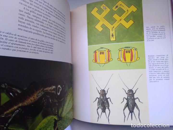 Libros de segunda mano: LOS MEDIOS DE COMUNICACION EN EL MUNDO ANIMAL COSME MORILLO EDITADO CYR CONSULTIN 1978. - Foto 6 - 269093143