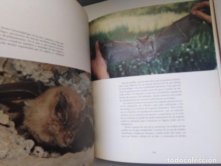Libros de segunda mano: LOS MEDIOS DE COMUNICACION EN EL MUNDO ANIMAL COSME MORILLO EDITADO CYR CONSULTIN 1978. - Foto 8 - 269093143