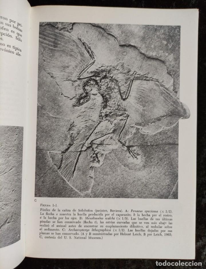 Libros de segunda mano: PRINCIPIOS DE PALEONTOLOGIA - RAUP - STANLEY - ARIEL - Foto 4 - 276638078