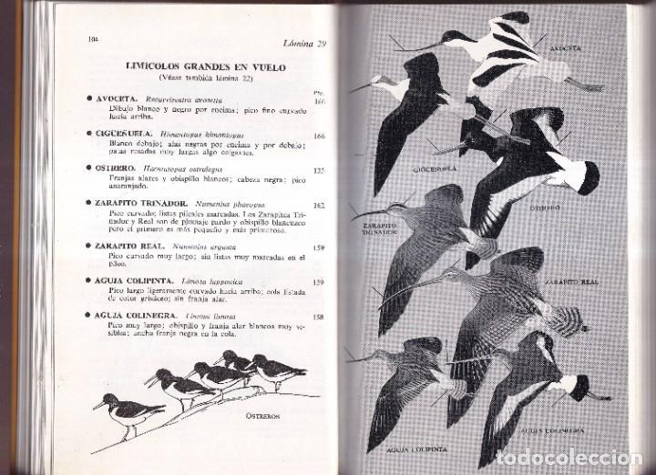 Libros de segunda mano: GUIA DE CAMPO DE LAS AVES DE ESPAÑA Y DE EUROPA - PETERSON, MOUNTFORT, HOLLOM - ED. OMEGA 1967 - Foto 3 - 277747198