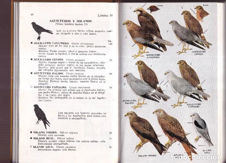 Libros de segunda mano: GUIA DE CAMPO DE LAS AVES DE ESPAÑA Y DE EUROPA - PETERSON, MOUNTFORT, HOLLOM - ED. OMEGA 1967 - Foto 4 - 277747198