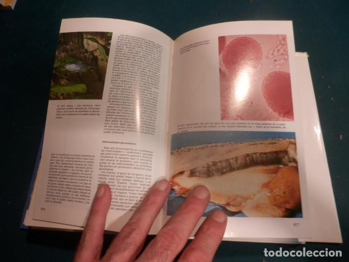 Libros de segunda mano: MINI-ATLAS DE PECES DE ACUARIO DE AGUA DULCE - DR. AXELROD - MAS DE 1.800 FOTOS - AÑO 1992 - Foto 7 - 288436068