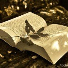 Libros de segunda mano: BIOLOGÍA COU. Mª ANGELES CABRERIZO. BLANCA CABRERIZO. FERNANDO DE CASTRO. PILAR JIMENEZ. Lote 288694103