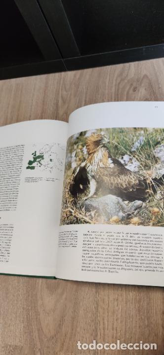Libros de segunda mano: Colección El hombre y la tierra. Fauna Ibérica. D. Félix Rodríguez de la Fuente. 30 tomos + 14 VHS. - Foto 18 - 293199678
