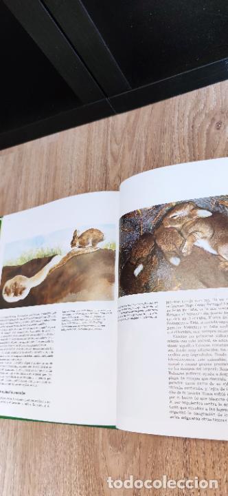 Libros de segunda mano: Colección El hombre y la tierra. Fauna Ibérica. D. Félix Rodríguez de la Fuente. 30 tomos + 14 VHS. - Foto 19 - 293199678