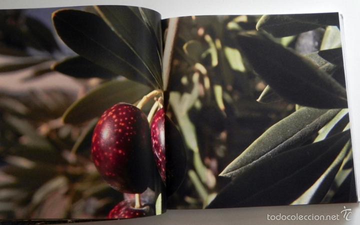 Libros de segunda mano: SABER DE ACEITE LIBRO HERRERA GASTRONOMÍA ACEITUNAS CATA SALUD RECETAS OLIVOS GUÍA ACEITES ANDALUCÍA - Foto 4 - 56905466