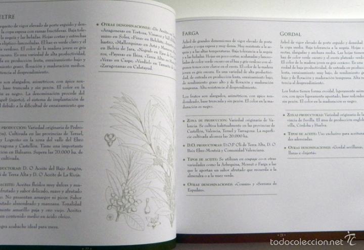 Libros de segunda mano: SABER DE ACEITE LIBRO HERRERA GASTRONOMÍA ACEITUNAS CATA SALUD RECETAS OLIVOS GUÍA ACEITES ANDALUCÍA - Foto 7 - 56905466
