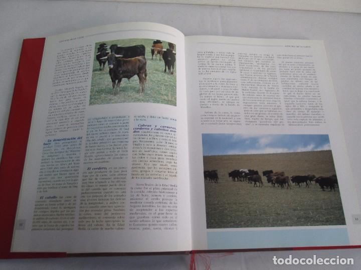 Libros de segunda mano: TRATADO DE CARNE Y CHARCUTERIA ARTESANA. JESUS LLONA LARRAURI. EDITA HEGAR MONSA 1998 - Foto 13 - 104992895