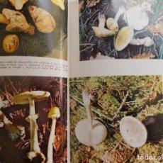 Libros de segunda mano: LIBRERIA GHOTICA. PEDRO LUIS VIANI. EL GRAN LIBRO DE LAS SETAS. COMO CONOCERLAS. 1975. ILUSTRADO.. Lote 118651379