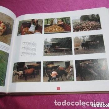 Libros de segunda mano: EL GRAN LIBRO DE LA SIDRA AÑO 1991 PENTALFA EXCELENTE ESTADO - Foto 5 - 155577322