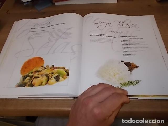 Libros de segunda mano: COCINANDO CON SETAS EN MALLORCA .TOMO II. ANTONI PINYA. DIARIO DE MALLORCA. 1ª EDICIÓN 2008. - Foto 21 - 164120614