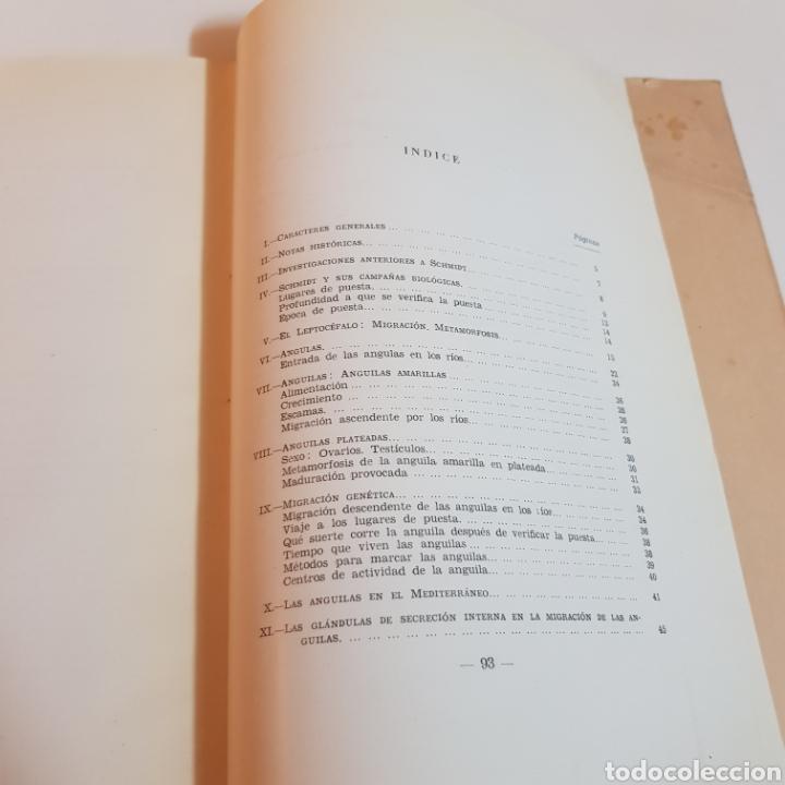 Libros de segunda mano: ANGULAS Y ANGUILAS ( BIOLOGIA PESCA Y CONSUMO ) OLEGARIO RODRIGUEZ Y ANGELES ALVARIÑO 1951 - Foto 5 - 207530457