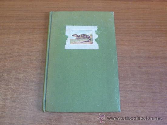 LAGARTIJAS, CUENTO DE SARA BOFILL. MECANOESCRITO, ILUSTRACIONES ORIGINALES Y DEDICADO. 1949. (Libros de Segunda Mano - Literatura Infantil y Juvenil - Cuentos)