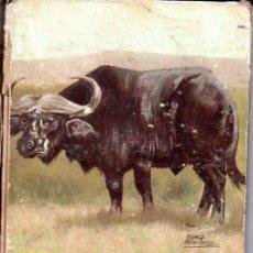 Libros de segunda mano: THUNDA EL BÚFALO (VIDAS DE ANIMALES SALVAJES MOLINO, 1960). Lote 54932755