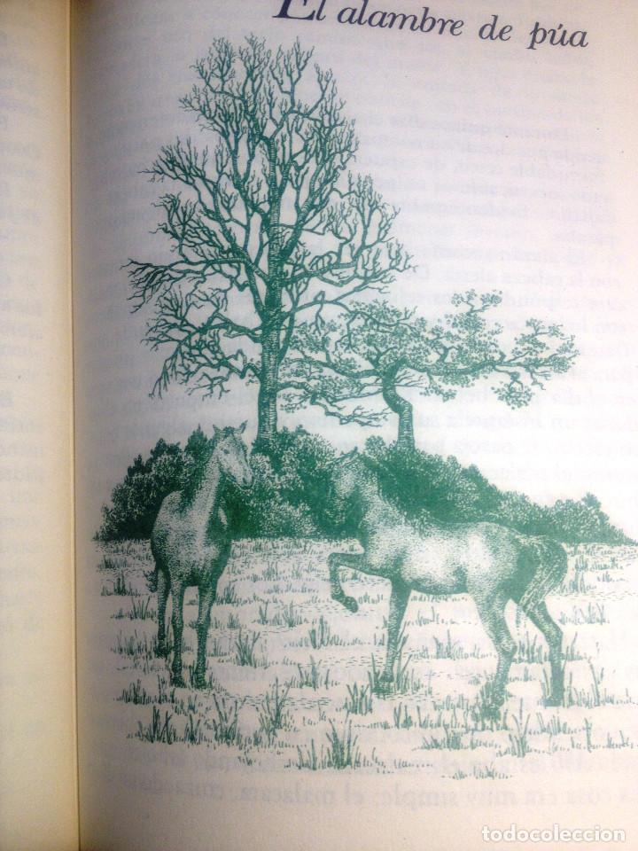 Libros de segunda mano: CUENTOS DE LA SELVA- Horacio Quiroga- Ediciones Generales Anaya- 1981 - Foto 3 - 74458467