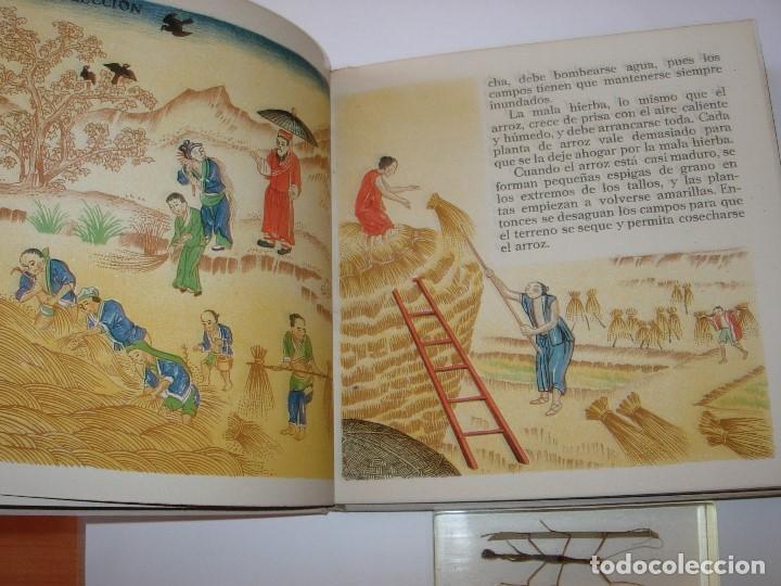 Libros de segunda mano: EL LIBRO DEL VESTIDO / EL LIBRO DEL ARROZ / MAUD Y MISKA PETERSHAM / SERIES PETERSHAM - Foto 14 - 156684266