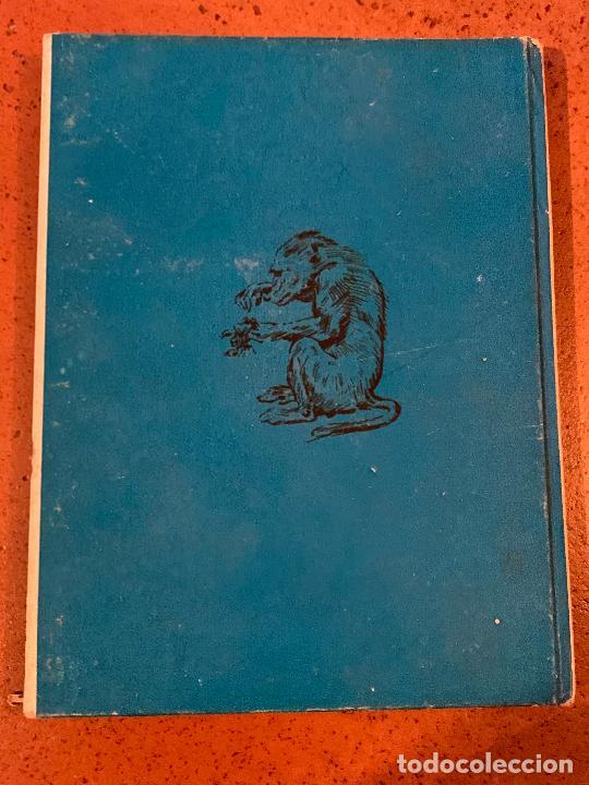 Libros de segunda mano: KRA EL MANDRIL. Antiguo cuento VIDAS DE ANIMALES SALVAJES. Editorial Molino - Foto 3 - 206388636