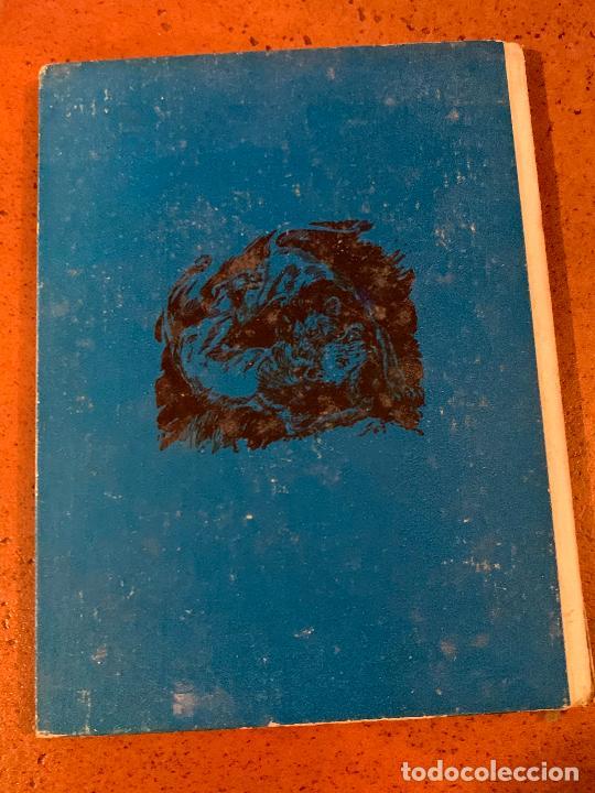 Libros de segunda mano: INKOSI EL LEON. Antiguo cuento VIDAS DE ANIMALES SALVAJES. Editorial Molino - Foto 3 - 206389480