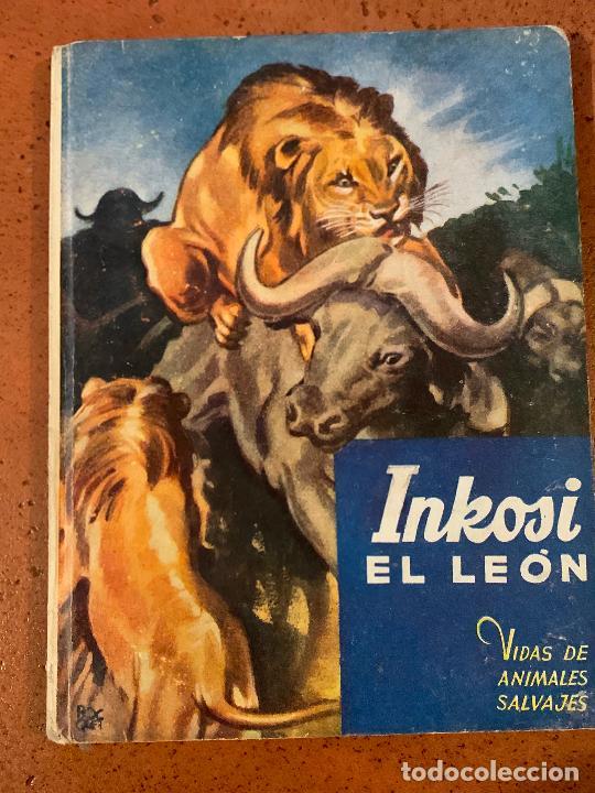 INKOSI EL LEON. ANTIGUO CUENTO VIDAS DE ANIMALES SALVAJES. EDITORIAL MOLINO (Libros de Segunda Mano - Literatura Infantil y Juvenil - Cuentos)