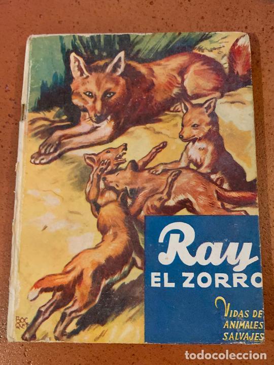 RAY EL ZORRO. ANTIGUO CUENTO VIDAS DE ANIMALES SALVAJES. EDITORIAL MOLINO (Libros de Segunda Mano - Literatura Infantil y Juvenil - Cuentos)