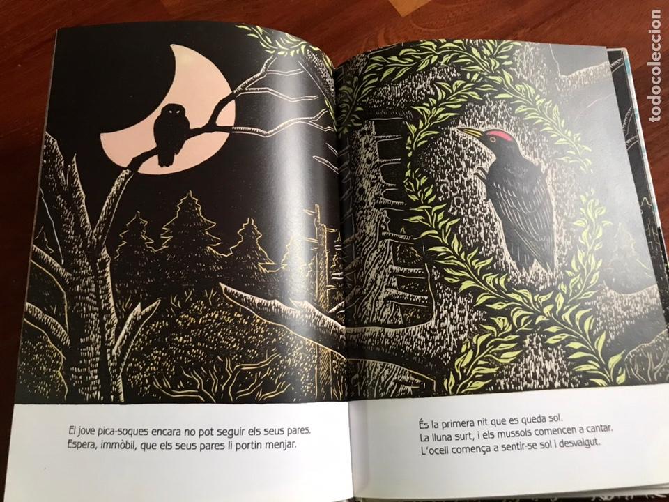 Libros de segunda mano: Conte el Bosc del Pica-soques keizaburo Tejima - Foto 2 - 231191290