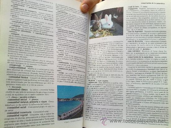 Diccionarios de segunda mano: Diccionario de la naturaleza. Hombre, Ecología, Paisaje - Foto 6 - 33336896
