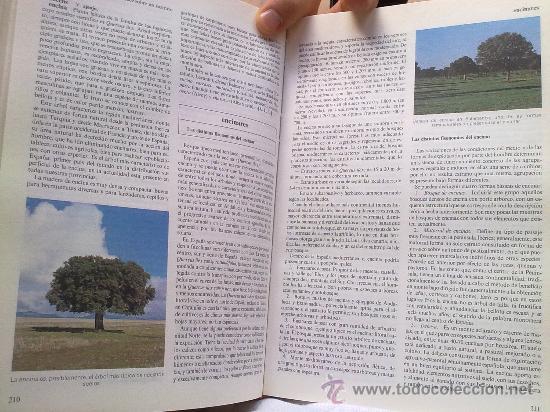 Diccionarios de segunda mano: Diccionario de la naturaleza. Hombre, Ecología, Paisaje - Foto 7 - 33336896