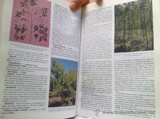 Diccionarios de segunda mano: Diccionario de la naturaleza. Hombre, Ecología, Paisaje - Foto 8 - 33336896