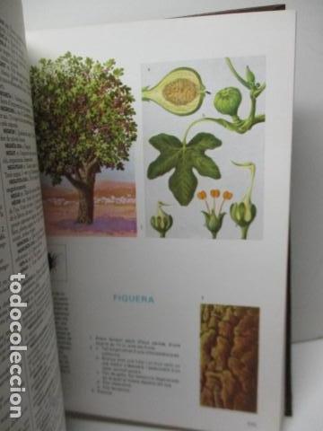 Diccionarios de segunda mano: BIBLIOTECA DEL MIL.LENARI DE CATALUNYA 2 TOMOS - DICCIONARI GENERAL CATALA - MIGUEL ARIMANY - Foto 29 - 119497275