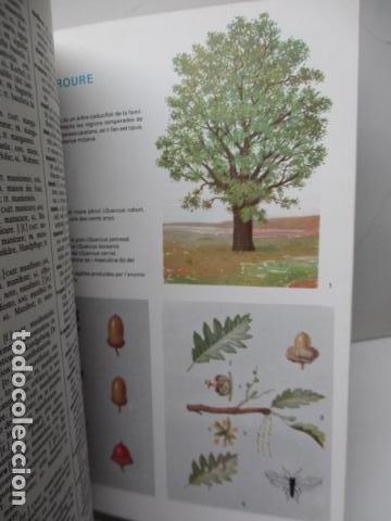 Diccionarios de segunda mano: BIBLIOTECA DEL MIL.LENARI DE CATALUNYA - MULTIDICCIONARI - Foto 13 - 119497399